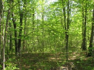 Attractive mostly level wooded lot in large tract subdivision off Route 340. This property has a survey on file with platted location for a septic system. Please call the office for details and documents.