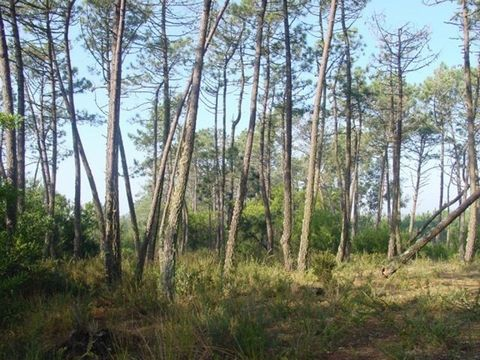 Pinhal with 30.700,00m2. The area extends itself of the Laughed to the dunes in the sea. By his center, passes a dirt beaten road (in good conditions), of access to the existing nurseries in that localities. Locates-itself in the Farms of the North -...
