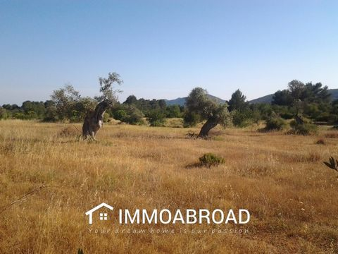 Plot of 17.000 m2 with licence to build presented and obtainable within one year (the latest January 2018) to build a house situed at Carretera de San Carlos in Ibiza with light and water. The project presented respects the latest regulations (2017) ...